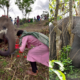 18 elephants die, likely due to lightning